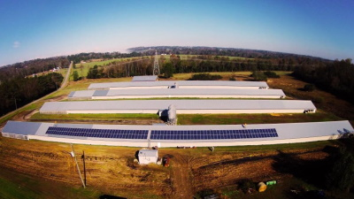 Chicken solar farm in Chattanooga